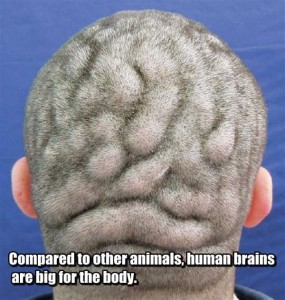 25 Things You Probably Didn't Know About The Human Brain (25 photos) 7
