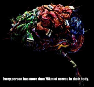 25 Things You Probably Didn't Know About The Human Brain (25 photos) 9
