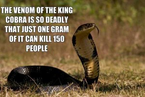 21 Random Interesting Facts You Probably Didn't Know (21 photos) 15