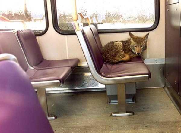 strange-people-in-subway (10)