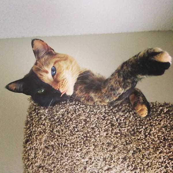 venus-chimera-cat (11)