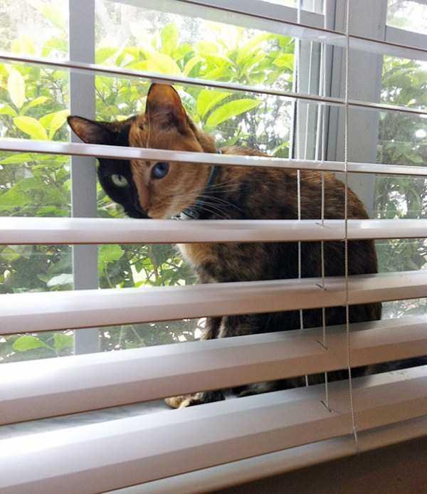 venus-chimera-cat (12)