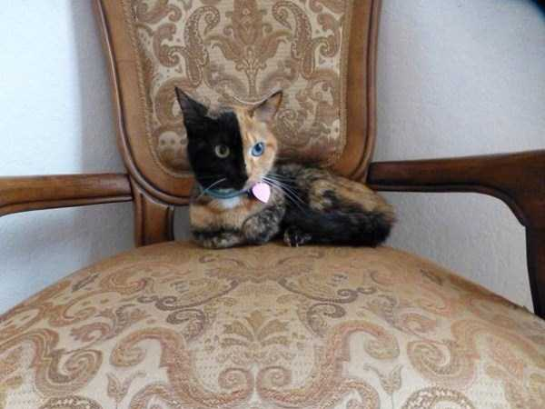 venus-chimera-cat (13)