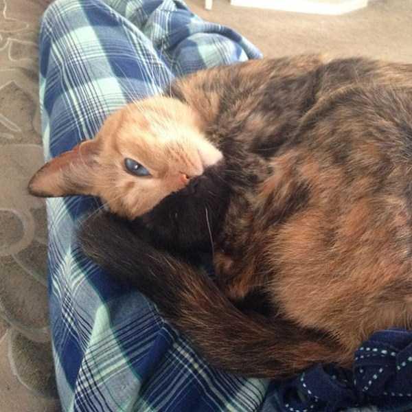 venus-chimera-cat (14)
