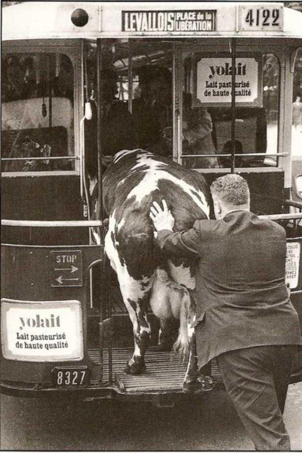 wtf-vintage-animal-pics (1)