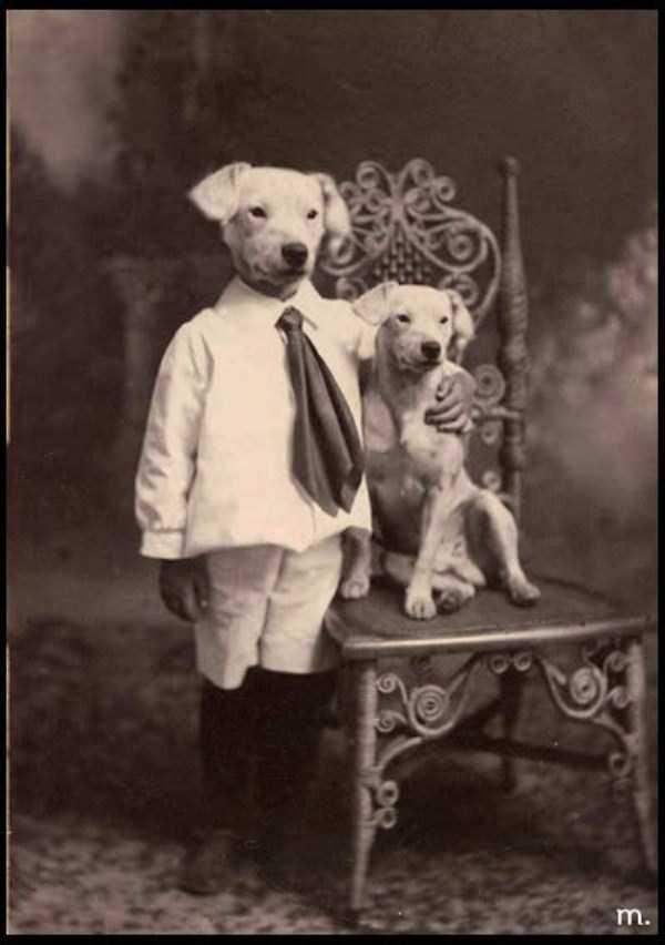 wtf-vintage-animal-pics (11)