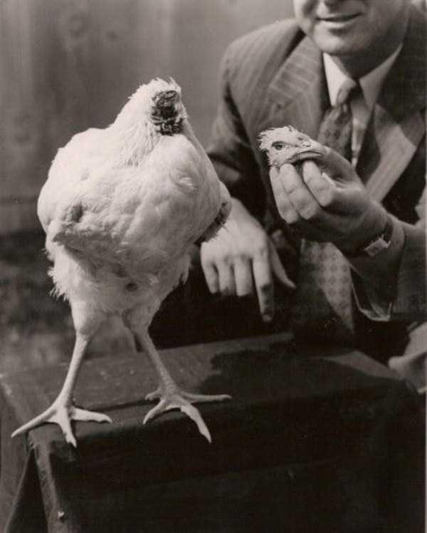 wtf-vintage-animal-pics (13)