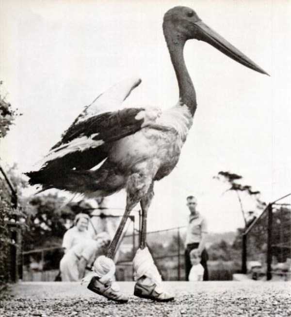 wtf-vintage-animal-pics (14)
