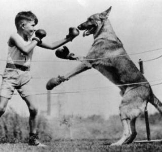 Seriously Bizarre Vintage Animal Photos (41 photos)
