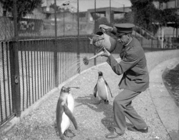 wtf-vintage-animal-pics (16)