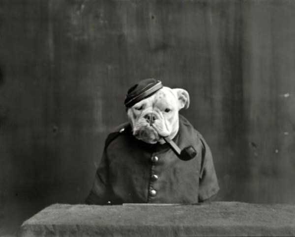 wtf-vintage-animal-pics (17)