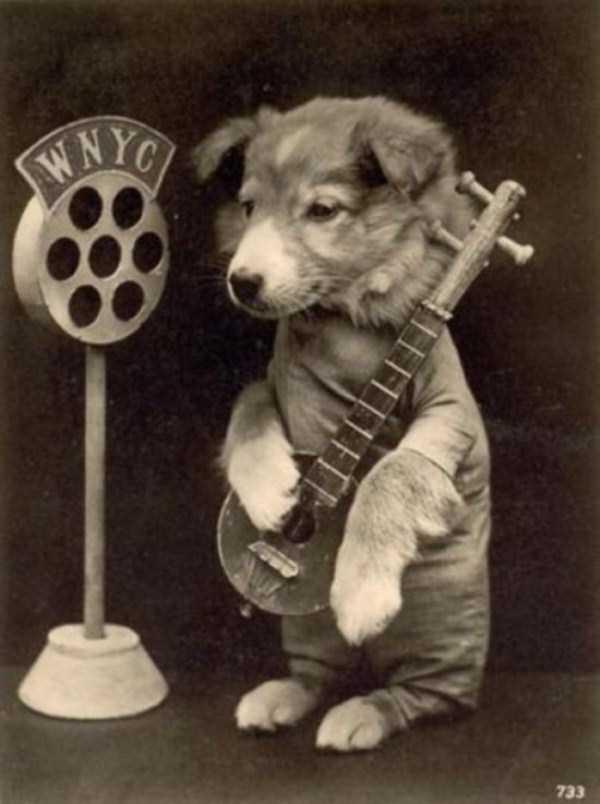 wtf-vintage-animal-pics (18)