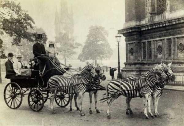 wtf-vintage-animal-pics (19)