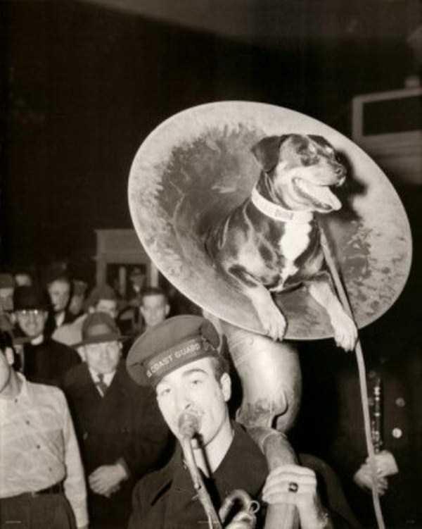 wtf-vintage-animal-pics (2)