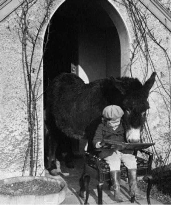 wtf-vintage-animal-pics (22)