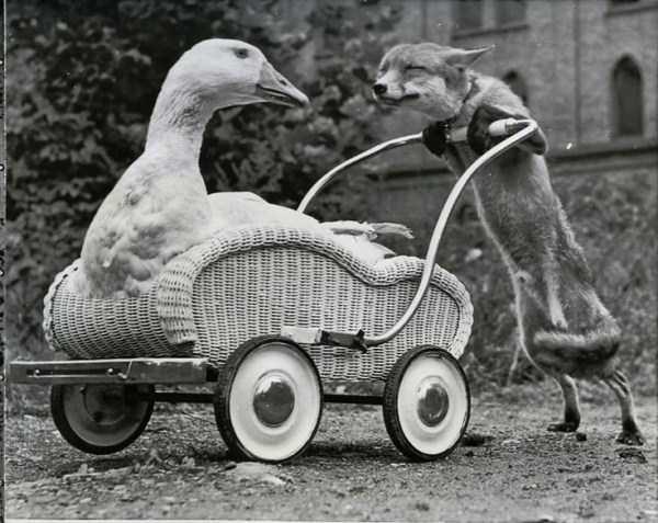 wtf-vintage-animal-pics (3)