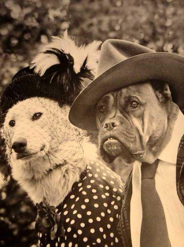 wtf-vintage-animal-pics (30)
