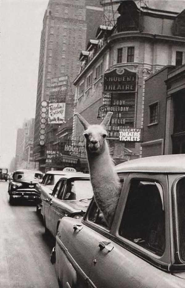 wtf-vintage-animal-pics (36)