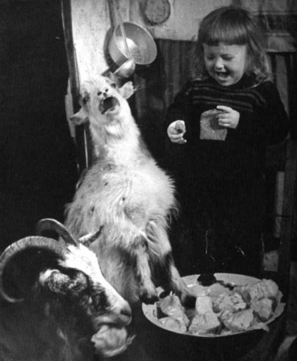 wtf-vintage-animal-pics (39)