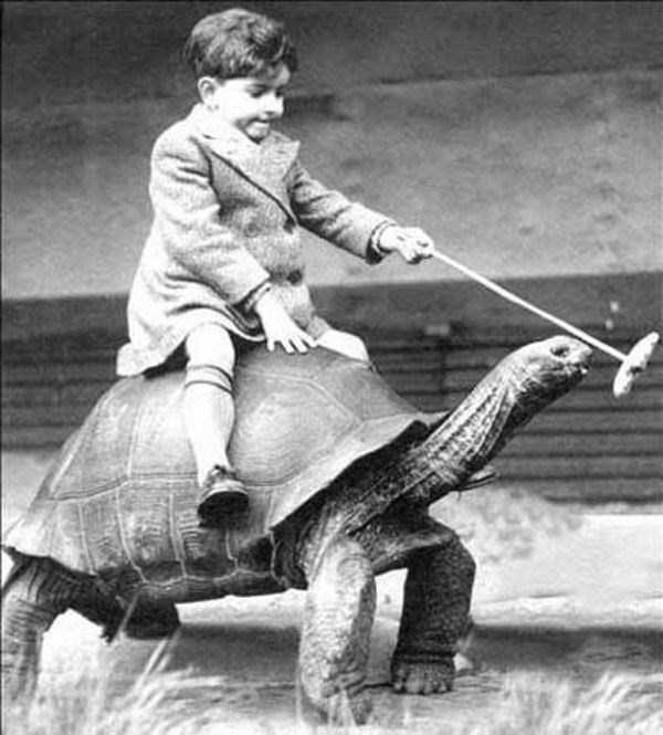 wtf-vintage-animal-pics (7)