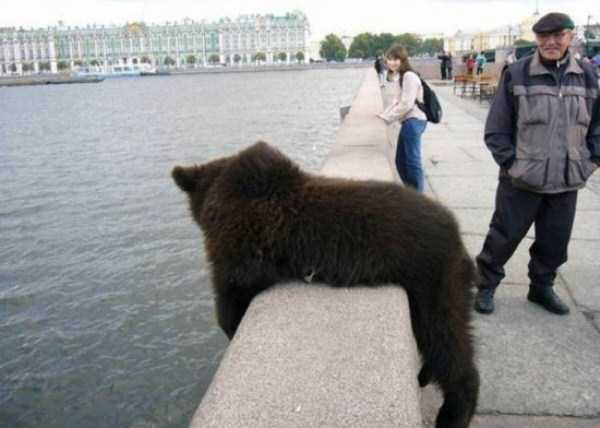 bears-in-russia (10)
