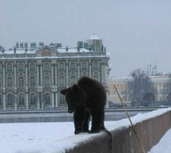 bears-in-russia (12)