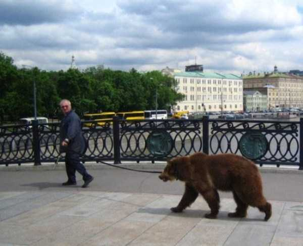 bears-in-russia (13)