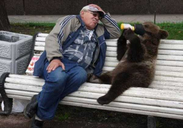 bears-in-russia (14)