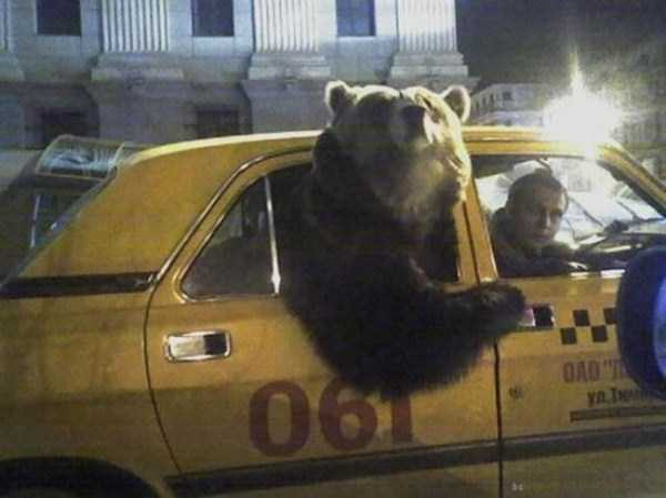 bears-in-russia (15)