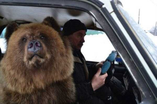 bears-in-russia (19)
