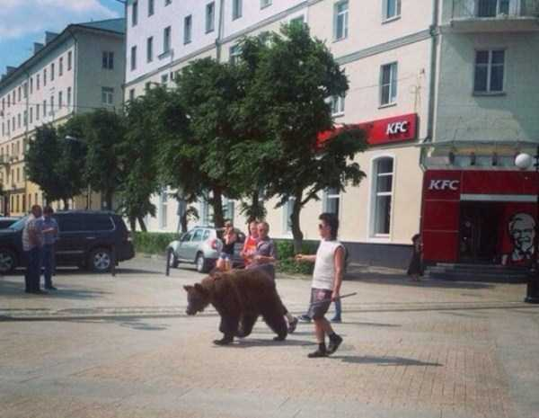 bears-in-russia (2)