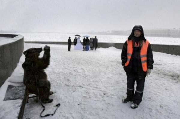 bears-in-russia (21)