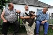 bears-in-russia (24)