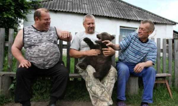 Bears are Just an Ordinary Pets in Russia (37 photos) 24