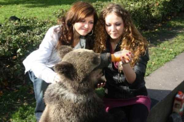 bears-in-russia (25)