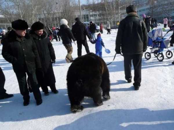 bears-in-russia (31)