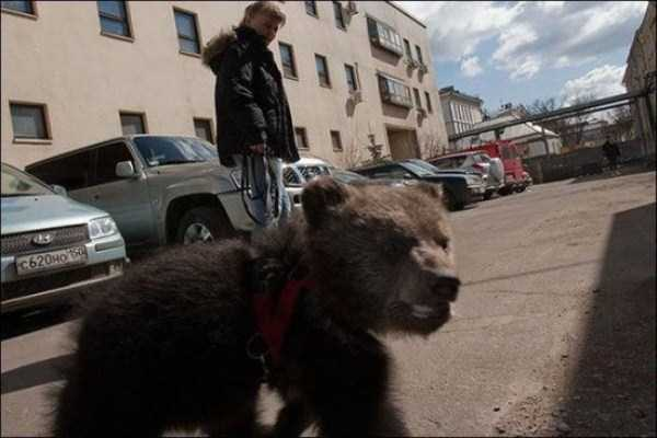 bears-in-russia (33)