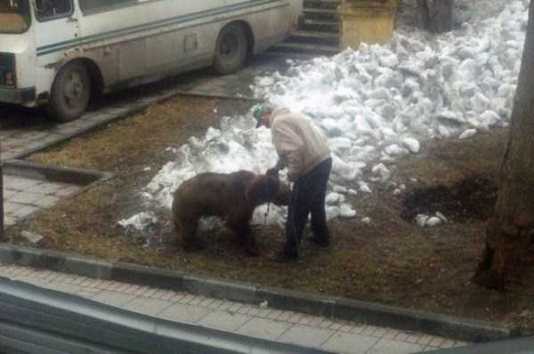 bears-in-russia (34)