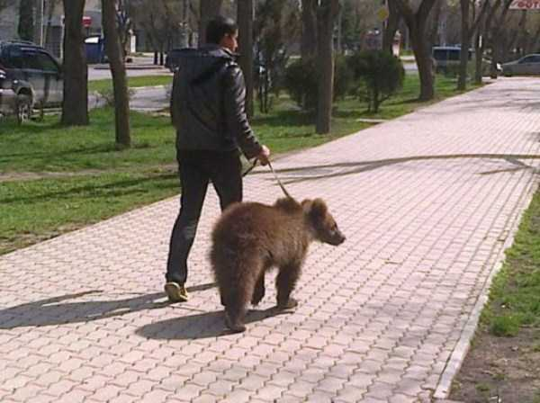 bears-in-russia (35)