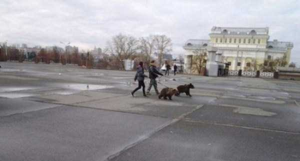 bears-in-russia (6)
