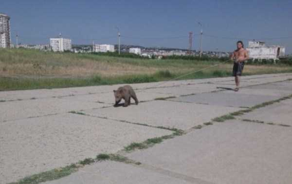 bears-in-russia (7)