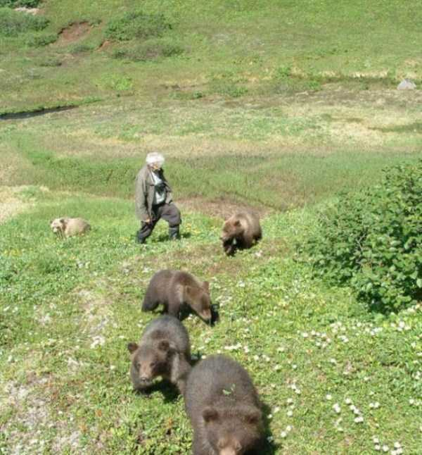 bears-in-russia (9)