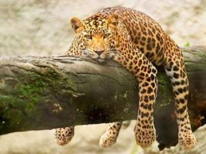 Exhausted But Still Adorable Animals (48 photos) 13