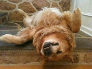 Exhausted But Still Adorable Animals (48 photos) 32