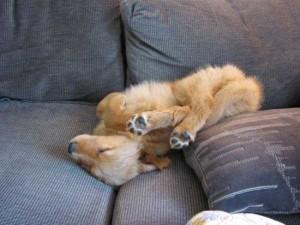 Exhausted But Still Adorable Animals (48 photos) 8