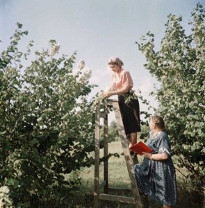 Rare Color Photos of Everyday Life in the Soviet Union in 1950s (30 photos) 4