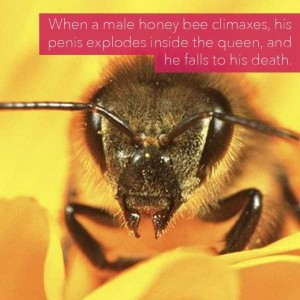 24 Horrific Animal Facts That Will Ruin Your Good Mood (24 photos) 15