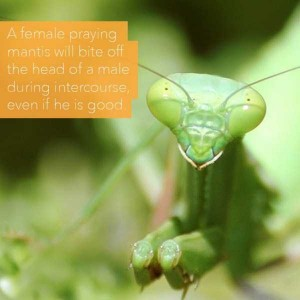 24 Horrific Animal Facts That Will Ruin Your Good Mood (24 photos) 17