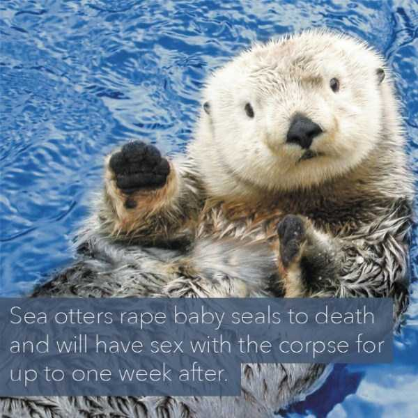 sad-animal-facts (21)