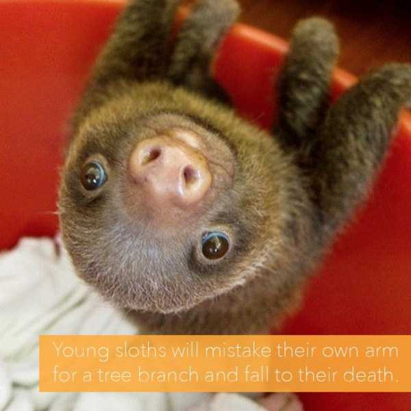 sad-animal-facts (23)